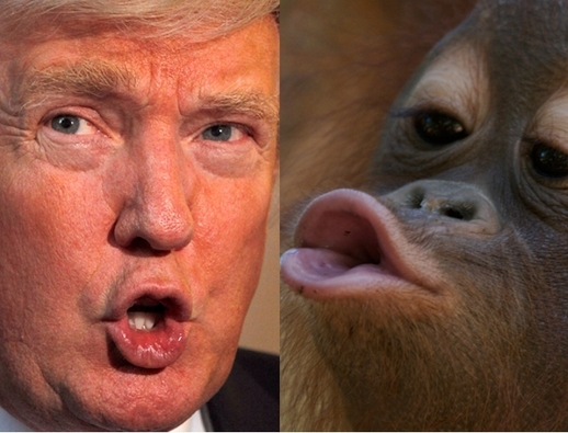 Donald Trump sues comic for $5 million over orangutan gag |...: newstalk.ie/donald-trump-sues-comic-for-5-million-over-orangutan-gag